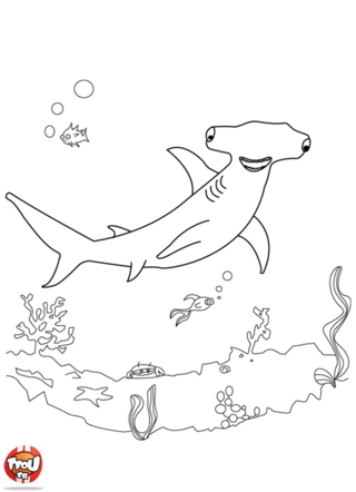 Coloriage: Requin marteau