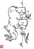 Rhinocéros et oiseau