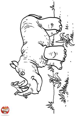 Coloriage: Rhinocéros et oiseau