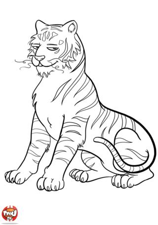 Coloriage: Tigre
