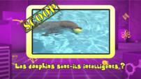 Vidéo-photo bonus_dauphins