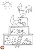 Les poules et leurs oeufs