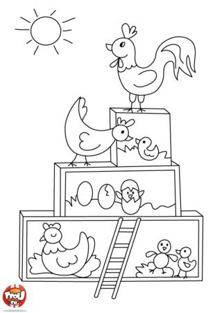 Coloriage: Les poules et leurs oeufs