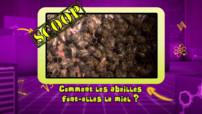 Vidéo-bonus-abeilles