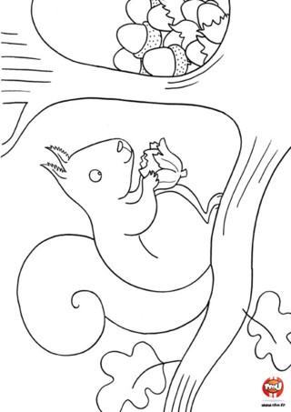 Coloriage : L'ecureuil mange une noisette. Imprime vite ce coloriage d'écureuil et amuse toi à le colorier avec les couleurs de ton choix