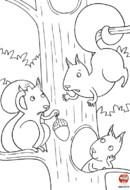 Les ecureuils se disputent