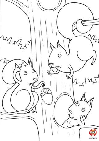 Coloriage : Les écureuils se disputent, surement parce que ce petit écureuil à reçu un gland sur la tête et que maintenant il a une jolie bosse ! Imprime vite ce coloriage rigolo !