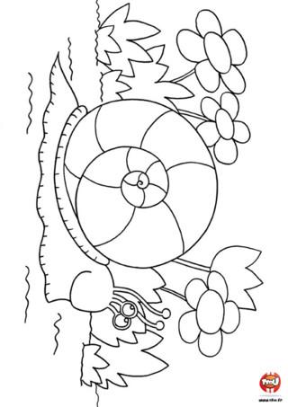 Coloriage : L'escargot et les fleurs. Imprime ce coloriage gratuitement et ajoute de jolies couleurs sur ces fleurs et cet escargot. A toi de jouer !