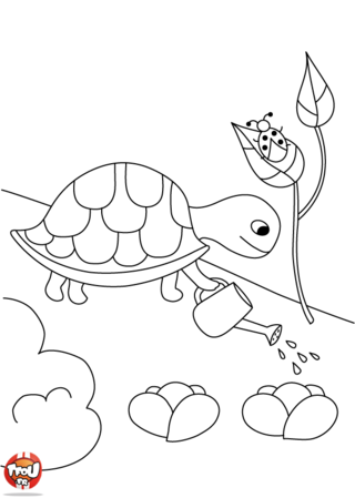 Coloriage: Tortue arrose
