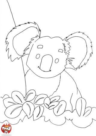 Coloriage: Koala mignon