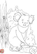 Koala sur son tronc