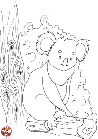 Coloriage: Koala sur son tronc