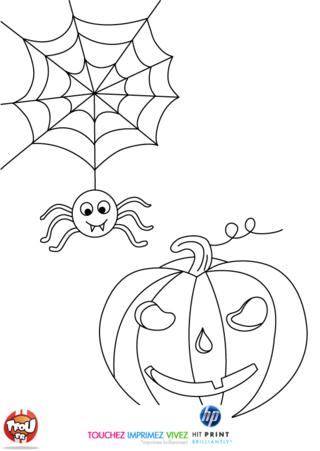 Coloriage: Une araignée va se poser