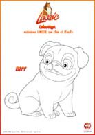 Lassie_Coloriage_Biff le joyeux carlin