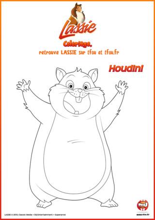 TFou.fr te propose un coloriage à imprimer gratuitement de Houdini, le hamster de la série Lassie. Tu ne connais pas Houdini ?! Houdini est un hamster qui mène une double vie. C'est l'animal de compagnie de Zoé mais aussi le 4ème membre de la bande de la grange. En bon comédien qu'il est, Houdini sait parfaitement comment faire pour obtenir tout ce qu'il veut. Lorsqu'il fait ses grands sourires ou son air malheureux personne ne peut lui résister. Mais il pourrait encore être plus mignon avec de jolies couleurs. Qu'est-ce que tu attends ? Va sur TFou.fr et imprime gratuitement ce coloriage pour enfants. Ensuite à toi de colorier !
