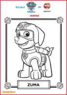 coloriage 1 zuma - paw patrol