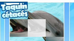WWF_vignette_taquin_dauphin