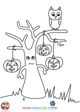 Coloriage: L'arbre et le hibou