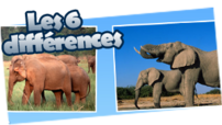 WWF_vignettes_6-differences_elephants