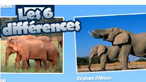 WWF_vignettes_6-differences_elephants