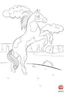 Thibaud le cheval sauvage