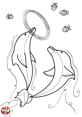 Coloriage: Dauphins joueurs