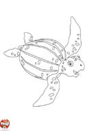 La tortue de Diego