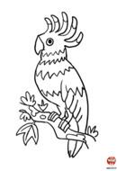 coloriage-tonio le perroquet