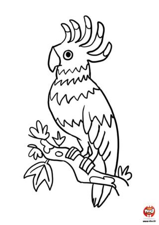 TFou.fr te propose d'imprimer gratuitement ce super coloriage spécial perroquet. Mais ce n'est pas n'importe quel perroquet, il s'agit de Tonio, le perroquet de TFou.fr. On l'adore Tonio car il répète tout ce que l'on dit et en plus il a un super plumage multicolore. Le problème c'est qu'il a perdu toutes ses couleurs sur ce coloriage. C'est triste un perroquet sans couleurs ! N'attends pas et redonne-lui ses couleurs ! Imprime gratuitement ce coloriage pour enfants sur TFou.fr et ajoute-y toutes les couleurs que tu souhaites. Bleu, blanc, rouge, jaune... tu peux mettre toutes les couleurs de l'arc-en-ciel !