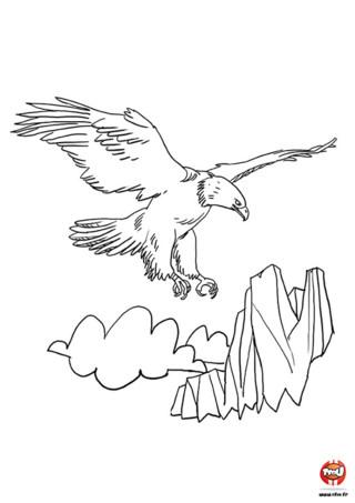 Tu aimes les aigles ? Ce coloriage est fait pour toi ! Imprime gratuitement ce coloriage d'aigle sur TFou.fr et colorie-le avec de superbes couleurs. L'aigle est le roi des oiseaux, il est majestueux, il est beau et voit tout. D'ailleurs cet aigle vole au-dessus des montagnes à la recherche de quelque chose... Mais quoi ? Des crayons de couleur ou des feutres ! Hé oui ! Sans couleurs cet aigle n'est plus vraiment un aigle. Aide-le à retrouver ses couleurs en imprimant ce coloriage sur TFou.fr et en lui ajoutant de jolies couleurs. Equipe-toi de tes crayons de couleur et à toi de dessiner.