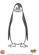 pingouin12