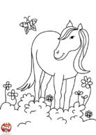 cheval dans le champs