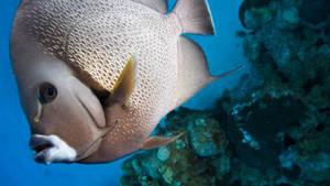 Les poissons font souvent penser aux vacances, non ? Les fonds marins aux couleurs éclatantes. Tu aimes observer les poissons ?