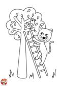 Chat sur l'échelle