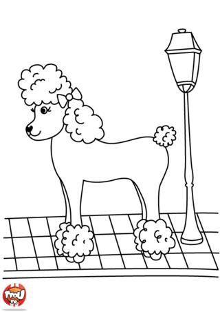 Coloriage: Caniche chic
