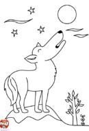 Un loup sous la lune