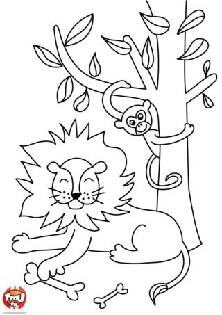 Coloriage: Un lion après son repas