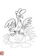Coq qui chante