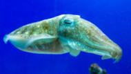 Coloriage Calamar