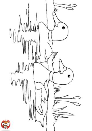 Coloriage: Canards sur l'eau