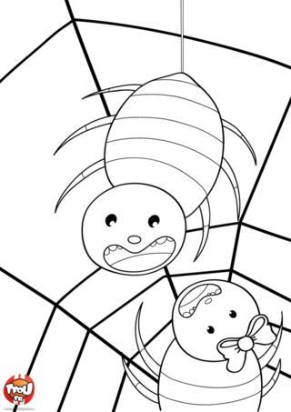 Coloriage: deux araignées