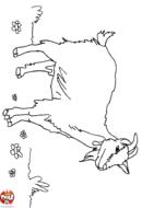 Chèvre dans la montagne