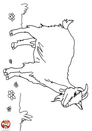Coloriage: Chèvre dans la montagne