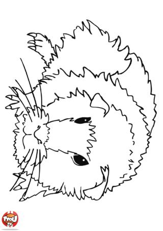 Coloriage: Petit cochon d'inde