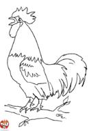 Coq sur une branche