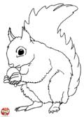 Ecureuil et sa noisette