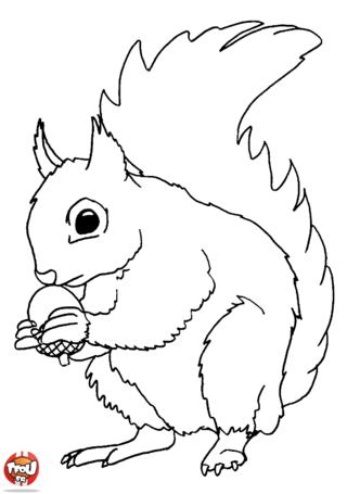 Coloriage: Ecureuil et sa noisette