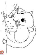 Hamster qui grignote