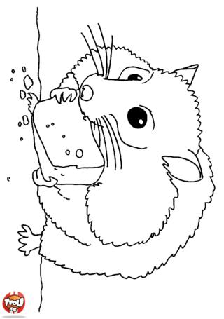 Coloriage: Hamster qui grignote