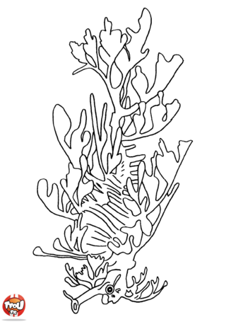 Coloriage : Hippocampe branche